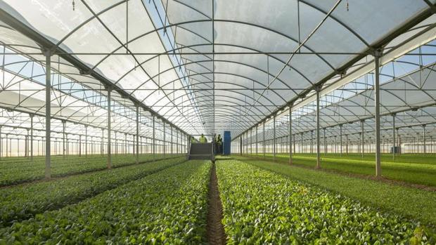 Soildiveragro propone nuevas prácticas de gestión y sistemas de cultivos