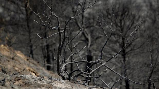 Terreno quemado a causa de un incendio