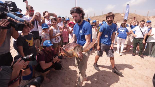 Imagen de la suelta de tortugas de la Fundación Oceanogràfic en El Saler
