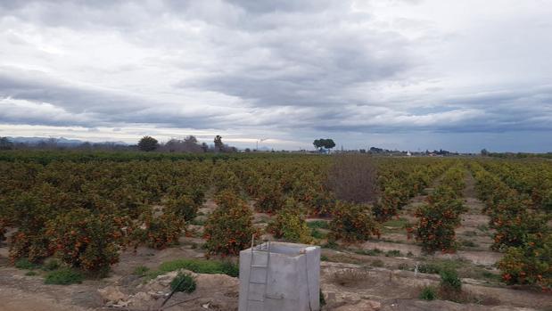 Un campo de cítricos en la Comunidad Valenciana