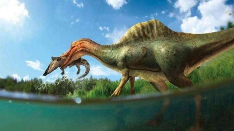 Identifican el primer dinosaurio espinosaurio de la Península Ibérica en  Castellón