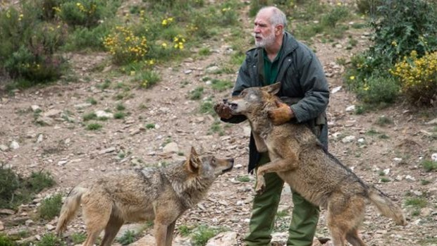 Odile Rodríguez De La Fuente Cree Que Elevar La Protección Del Lobo No Es Ni Social Ni Científicamente Necesario