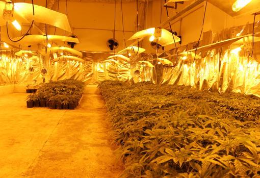 Imagen de uno de los cultivos de marihuana desarticulados por la Policía Nacional