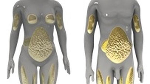 Grasa en el área del abdomen