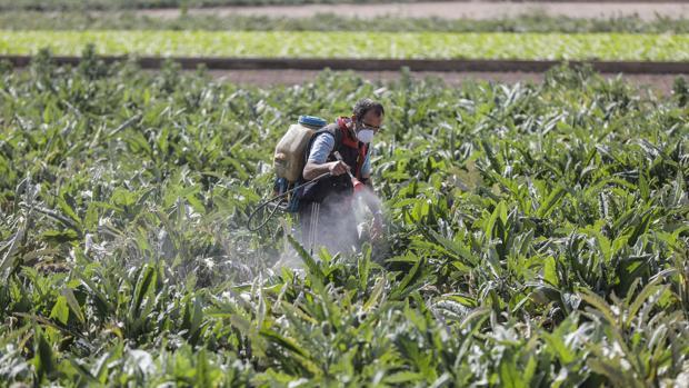 Un informe del gobierno de EE.UU. revela la verdadera catástrofe del campo español por el coronavirus