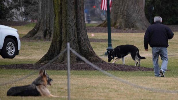 Champ y Major, los dos perros del presidente en los jardínes sur de la Casa Blanca