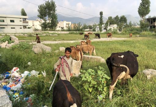 Niños con los animales en el terreno de la antigua casa de la familia de Bin Laden