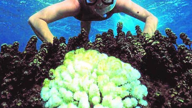 Los grupos internacionales están trabajando para elevar el total de océano protegido al 10% en el año 2020