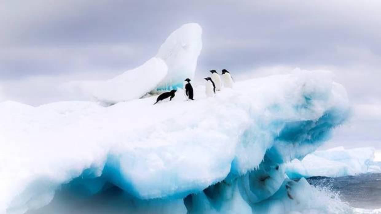 pinguino-antartida-efe-ku3E--1240x698@abc-U10109867648vvH--1240x698@abc