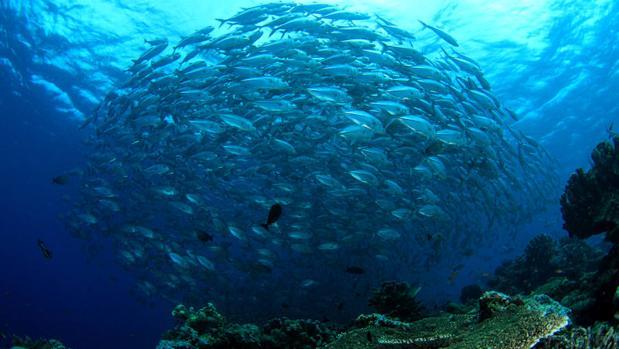 Educar en pesca sostenible en el Día Mundial de los Océanos