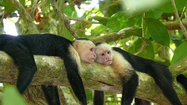 Costa Rica declara de interés nacional la alfabetización biológica