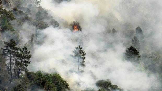 Los incendios forestales podrían convertirse, también, en un problema en invierno