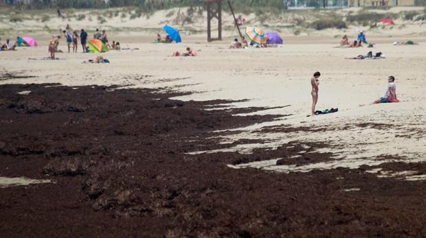 Una alga invasora se convierte en una pesadilla en el Estrecho de Gibraltar