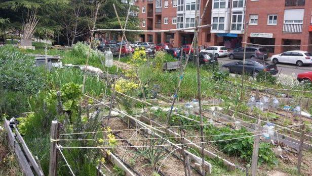 ¿Son seguros los alimentos procedentes de huertos urbanos?