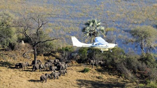 Zimbabue se plantea salir de Cites para poder comerciar su marfil