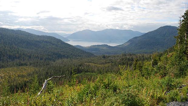 Trump permitirá la explotación de un importante bosque protegido de Alaska