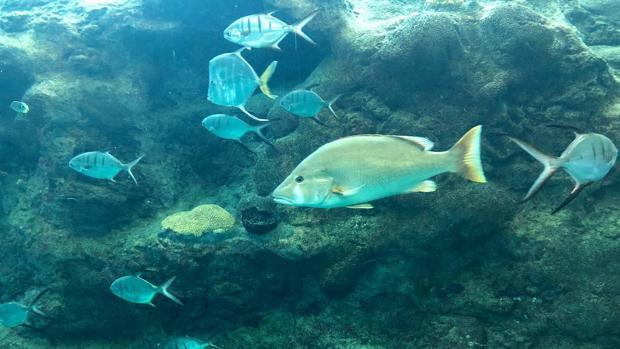 La salud a largo plazo de Gran Barrera de Coral es «muy pobre», alerta un informe