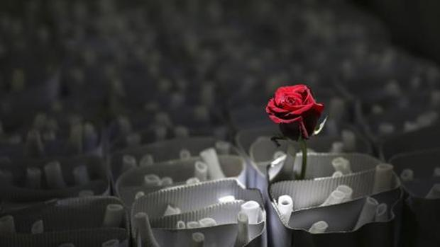 Las Mejores Frases Bonitas Para San Valentín