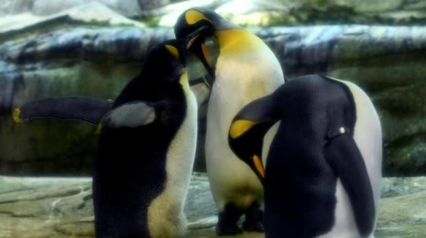 La pareja de pingüinos, juntos en el zoo