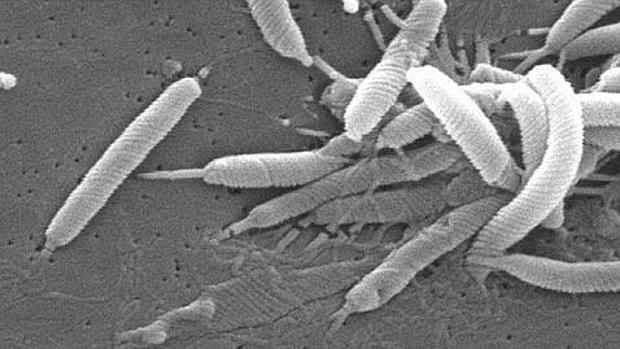 tratamiento actual de helicobacter pylori 2020