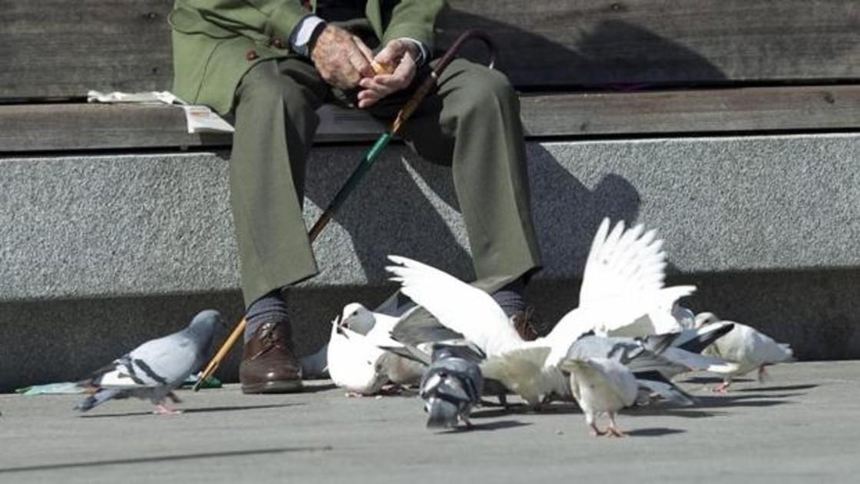 Dar de comer a las palomas, un gesto peligroso para tu salud