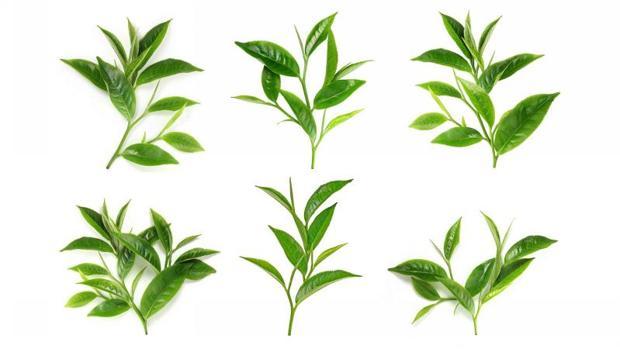 El té es uno de los alimentos más ricos en flavonoides