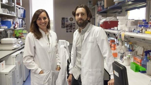 Alejo Efeyan, jefe del Grupo de Metabolismo y Señalización Celular del CNIO, y Ana Ortega-Molina, primera autora del estudio