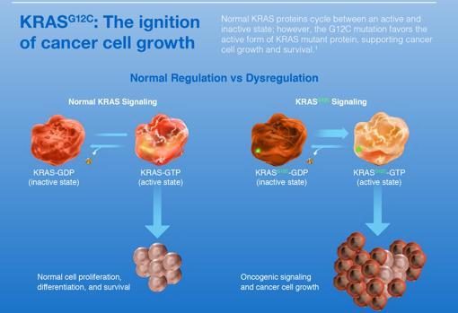 Tratamiento cancer de colon kras mutado