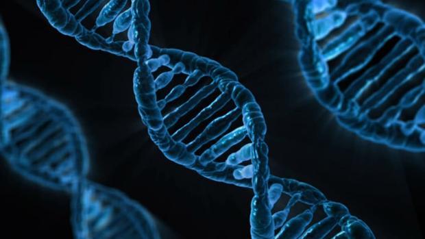 Resultado de imagen de perdida del gen p53