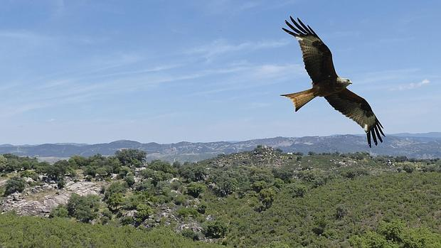 Sabías que pueden avistarse 200 especies de aves en el parque ...