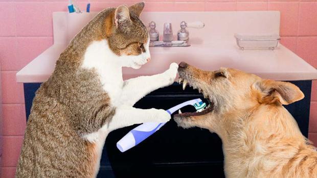 ¿Cuál es la enfermedad de las heces de gato?