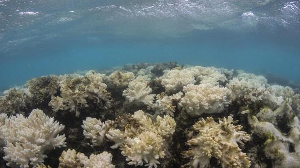 La Gran Barrera de Coral en peligro