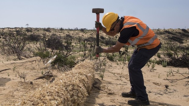 Un operario trabaja en el Paraje de Cuesta Maneli, ubicado en el término municipal de Almonte (Huelva)
