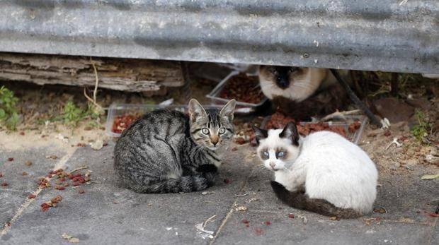 Graban a un hombre envenenando la comida de una colonia de gatos en Sevilla