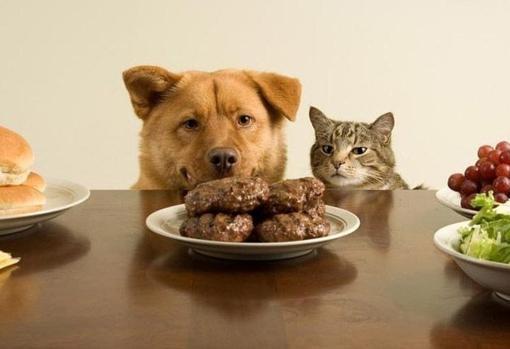 Un perro y un gato mirando hamburguesas sobre una mesa