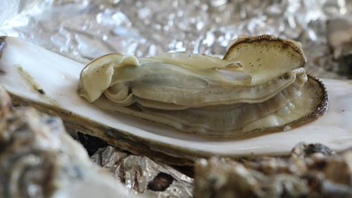 La europea y la asiática son dos de las variedades más comunes de ostra en este lado del mundo
