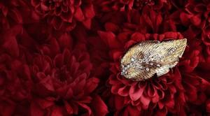 ¿Cuántos tipos de oro hay en joyería?