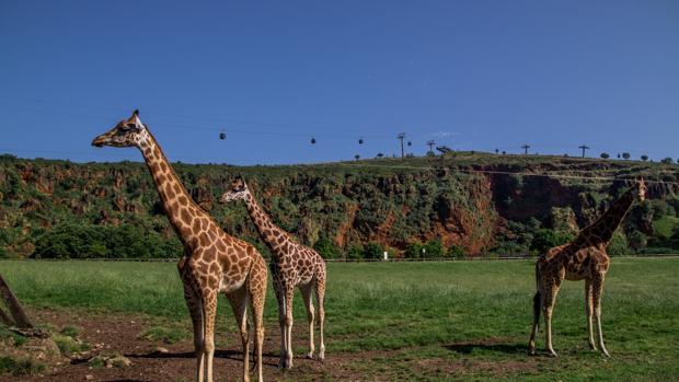 Uno de los sitios que visitar este agosto: el Parque Natural de Cabárceno